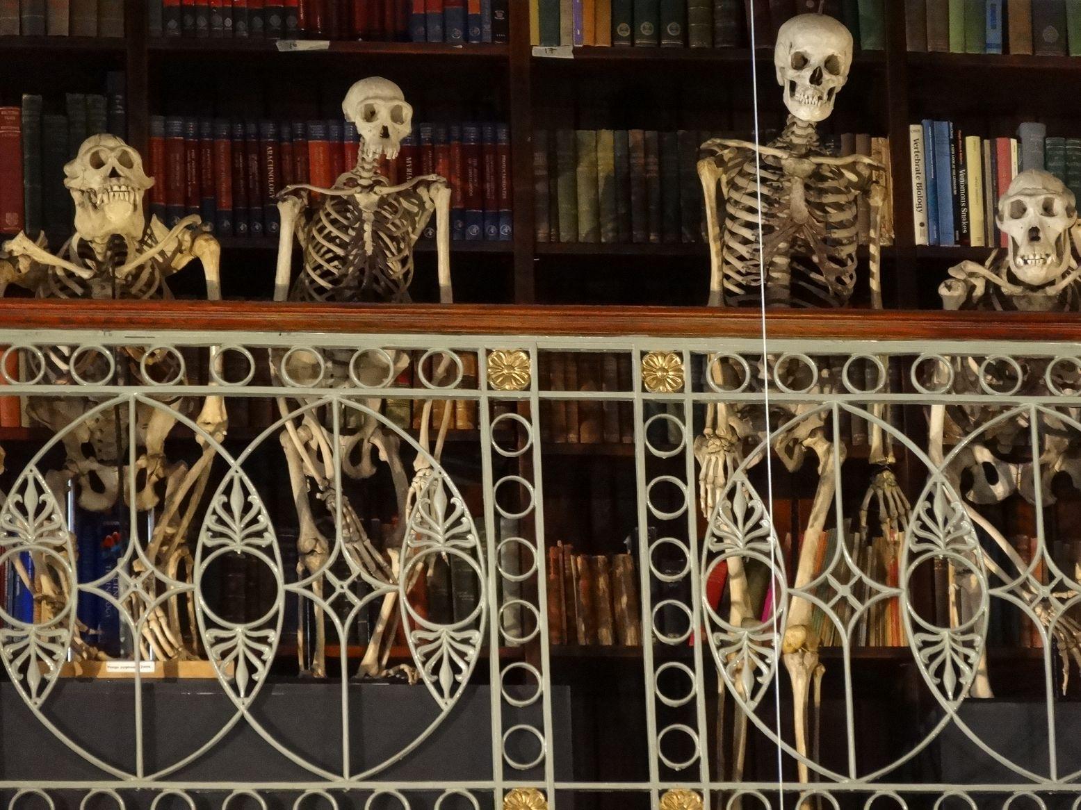 kleines skelett modell
